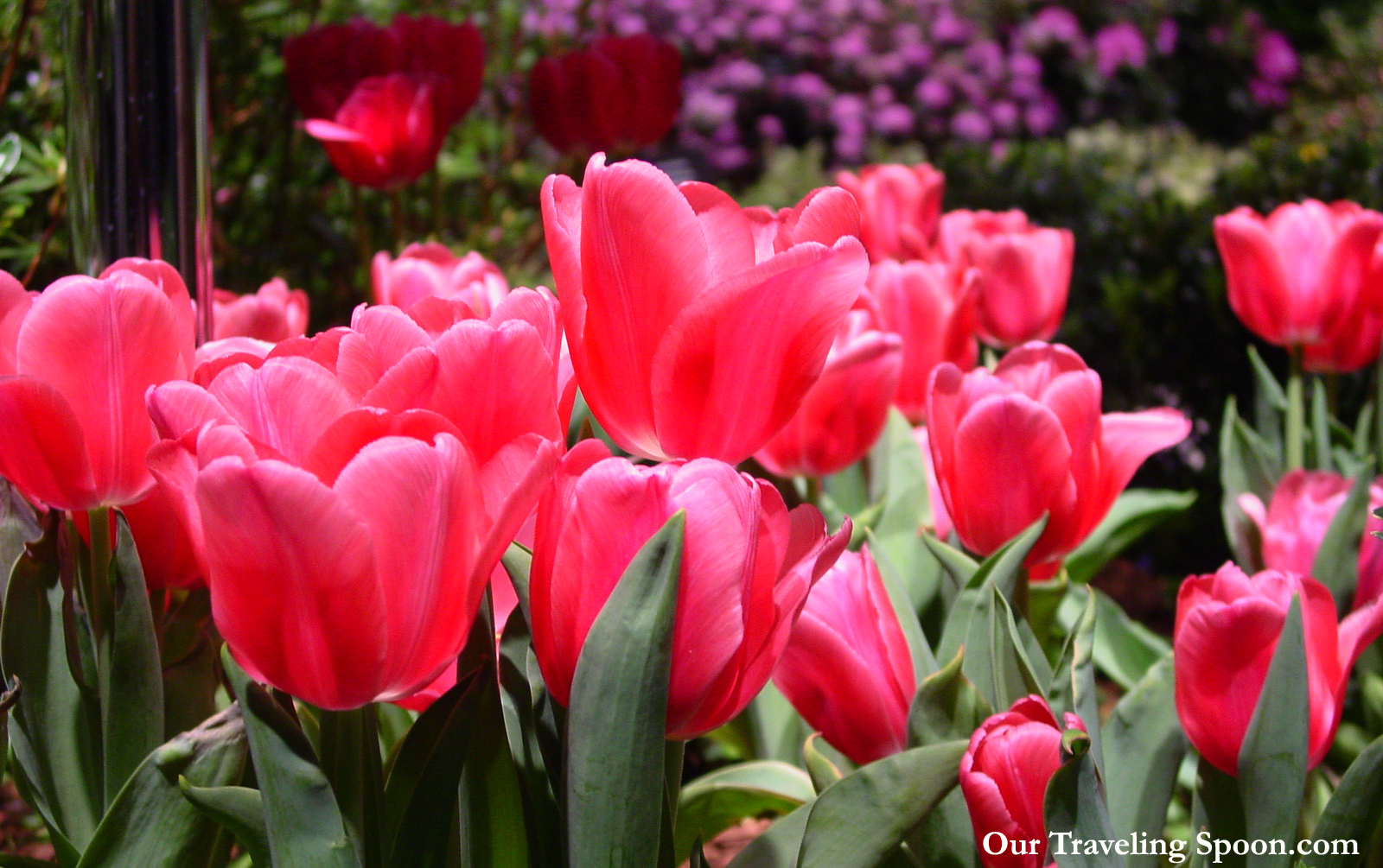 5 best tips to enjoy the capital district garden and flower show